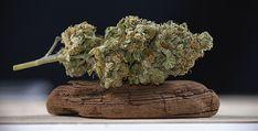 Cannabis Medizin zwischen Legalisierung und Verbot - Es geht in erster Linie darum, dass die Hanfmedizin offenbar beim Volk angekommen ist. Menschengruppen aus allen Altersbereichen strömen in die Ordina... Hot Pot, Gras, Drying Herbs, 5 Ways, Weed, The Cure, Air Max, Images, France