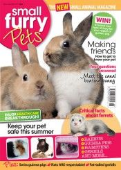 Small Furry Pets magazine: A subscription to Small Furry Pets magazine provides coverage of all aspects of choosing and caring for all types of small animals including rabbits, guinea pigs, hamsters, gerbils, chinchillas, mice, rats, and more recent arrivals on the scene such as degus, reflecting the dynamic nature of this sector.  Each quarter Small Furry Pets magazine includes news, health care, breeder profiles, reader competitions and more, with the emphasis throughout being placed…