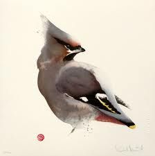 Waxwing by Karl Martens, American born painter Watercolor Watercolor Artists, Watercolor Animals, Watercolor And Ink, Watercolor Illustration, Watercolor Paintings, Watercolors, Karl Martens, Gravure Photo, Detailed Paintings