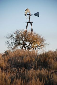 Looks like Lubbock Farm Windmill, Old Abandoned Buildings, Old Windmills, Wind Mills, Grand Prairie, Down On The Farm, Old Farm, Growing Tree, Le Moulin