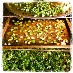 Dry herbs in oven 2ish hours at about 170 degrees. Keeps the fresh color and taste!