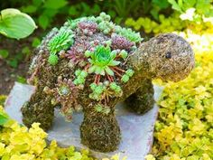 succulent baby turtle topiary