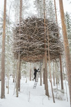Exploring the Treehotel, Sweden – The Londoner