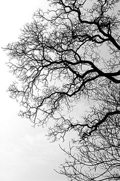 I love how the silhouette of these branches creates lace against the sky /BR