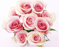 Bursa çiçek sipariş online kolay alışveriş aynı gün teslimat