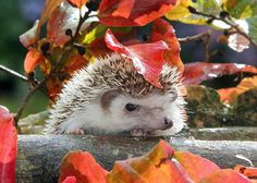 A natureza é tão sábia que criou guardas-chuvas naturais para os animais! Confira!