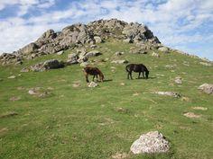 https://flic.kr/p/EU7dNx | Amenizando la cima del monte Adarra.