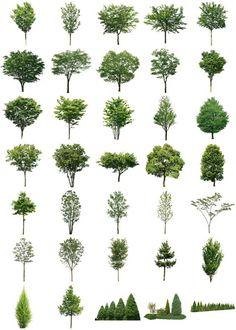 樹木素材無料ダウンロード