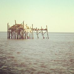 Old Florida in Cedar Key - last time I was there in 2013 this stilt house was still standing. Live Oak Florida, Cedar Key Florida, Old Florida, Florida Sunshine, Sunshine State, Stilt House, Blood And Bone, House On Stilts, White Sand Beach