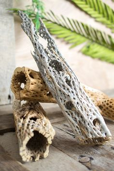 Cholla Cactus Wood 10-12 inch. Great addition for a jungle or tiki/luau  themed party!