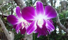 Orchidea Plants, Plant, Planets