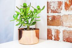 """AmazonSmile : 3"""" Copper Succulent Planter - Perfect For All Plants - By Alchemade : Patio, Lawn & Garden"""