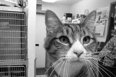 News / Blog » Olympic Veterinary Clinic