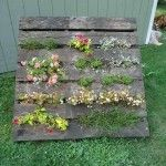 Build a Pallet Vertical Garden