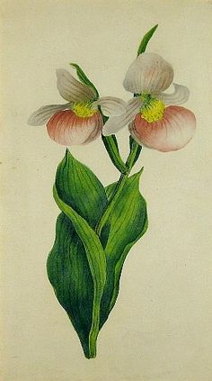 Unknown (American) . Lady Slippers . 1830