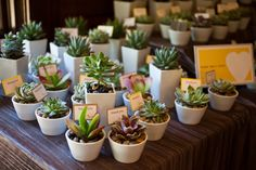 Love The Vase Http Belladestinee Blog Tag Succulent Wedding Favors