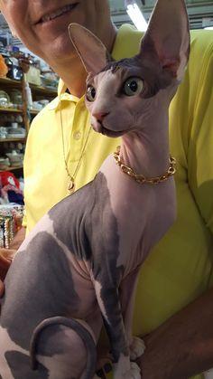 Saw this cool cat today at flea market http://ift.tt/2eZPJF4