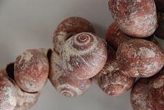 Australian Aboriginal Arnhem Land Ceremonial Shells