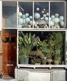 Plants + Globes