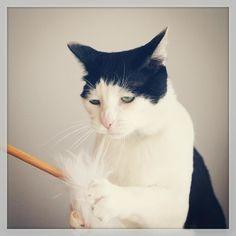 「初めて見たときは、何てかわいい猫だと思いました(親バカ)」