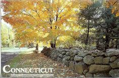 Connecticut stone walls