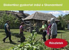 házikerti uborkatermesztés - Kertlap Kertészeti Magazin & Kertészeti Tanfolyamok