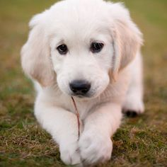 This puppy makes me want a puppy now !