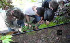 Wo sonst unbemerkt einfach Gras wächst, kletterten schon bald Tulpen, Melonen, Salatköpfe und Tomaten aus individuellen Pflanzenkistchen.