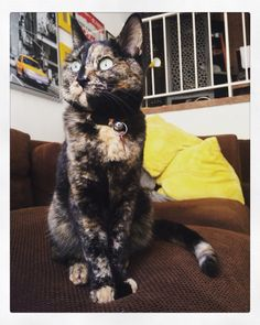 Catrina the cat posting pretty #catrina #catrinathecat #cats  #catswithattitude #tortie