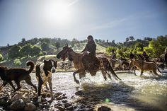 On the road in Koohrang, Chelgerd, Chaharmahal and Bakhtiari, May 2016. Traditional migration is still relevant for many nomads, especially amongst Bakhtiari, who cross the mountains on foot, with their sheep, horses and donkeys. Masume fell for the first time during a migration, and mounts her horse a good part of the way.