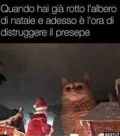 Quando hai già rotto l'albero di natale Funny Video Memes, Really Funny Memes, Funny Quotes, I Love Cats, Cool Cats, Animal Memes, Funny Animals, Italian Memes, Pokemon