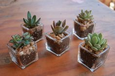 This collection is for our DIY assorted succulents in a 2 container and classic…