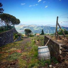 Reposted from @soozyzoo  #vino #wine #etna #winelover #instasicily #igsicilia #vineyard #sicily #winery #vigneto #winerytour #gambinovini #winetasting #winetourism #vinery #cellar #grapewines #whatsicilyis #igcatania #igsicilia #igsicilia #winemakers #ilovewine #wineoclock #grapevines  Who knew volcano wine could be so good? #etna #straightfromthesource #italy #travel #smartflyer wine vacation dolcevita winery gambinoWho knew volcano wine could be so good? etna straightfromthesource italy…
