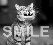 Inspiring picture cat, cute, smile. Resolution: 400x574. Find the picture to your taste!