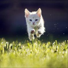Kitty by Maris Ojasuu, via 500px