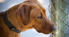 5 choses à savoir sur l'adoption d'un chien ou d'un chat en refuge