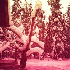 My childhood climbing tree