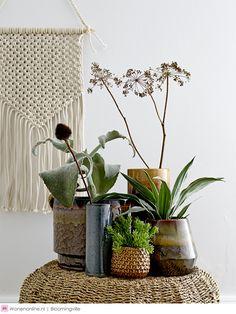 Give your home a Spring Refresh – Att Pynta Tall Indoor Plants, Potted Plants, Nordic Design, Scandinavian Design, Terrarium Design, Another Green World, Plantas Indoor, Vida Natural, Vase Design