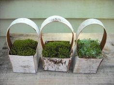 birch tree baskets
