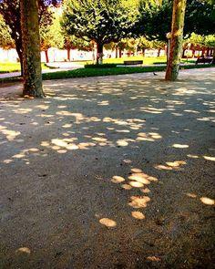 O chão também conta... E parece que cintila! #chãobonito #passeiosnojardim…