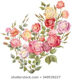 Similar Images, Stock Photos & Vectors of Watercolor drawing of a branch with leaves and flowers. Composition of pink roses, wildflowers and garden herbs Decorative bouquet isolated on white background. Simple Watercolor Flowers, Easy Watercolor, Watercolor Drawing, Colorful Roses, Stock Foto, Vintage Roses, Botanical Illustration, Pink Roses, Print Patterns