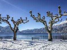 snow in Ascona, Ticino, Switzerland