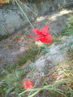 Gracias por tu flor tan bonita