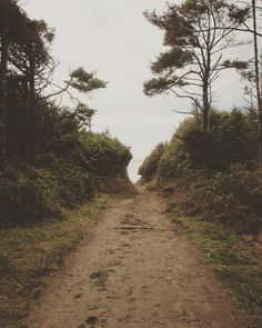 Path to #WickaninnishBeach  #PacificRimNationalPark #ExploreBC  @tourismtofino @tourismbc @explorecanada @parks.canada