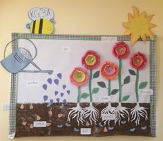 Plant life cycle bulletin board idea- Thank you Luanne for this inspiration