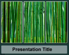 Sugar cane PowerPoint template, nature PPT slide template for PowerPoint presentations, for sugar cane production presentation report using PowerPoint a