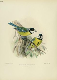 1881, c 1.v.9 - A history of the birds of Europe : - Biodiversity Heritage Library
