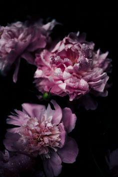 Bloom, Bloesem, Flora, Bloemen, Bloemblaadjes
