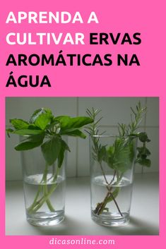 10 Ervas aromáticas para cultivar em casa sem terra Meet 10 Aromatic Herbs That Can Be Grown Without Land Aromatic Herbs, Medicinal Herbs, Compost, Grow Home, Garden Plants, Nespresso, Mother Nature, Glass Vase, Landscape