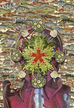 Artist's fertile nature field guide collages reveal anatomy of the imagination : TreeHugger